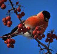 A madarakkal teli kert egy valóban élettel teli kert!