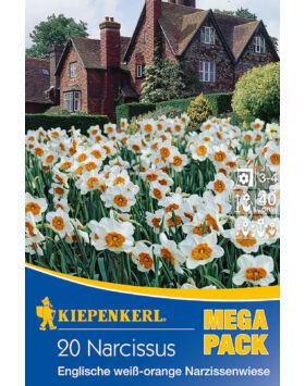 Mega-Pack – Nárcisz angol fehér-narancs nárciszmező