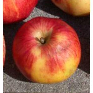 'Fahéj' (nyári csíkos fűszeres) régi almafajta
