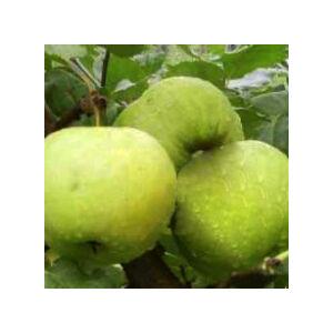'Pónyik alma' régi almafajta