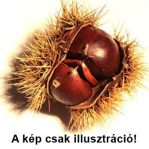 Castanea 'Iharosberényi 29' – Szelídgesztenye