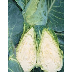 Brassica 'Duchy' - Vékony levelű káposzta
