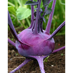 Brassica oleracea – Karalábé
