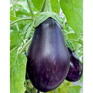 Solanum 'Bonica / Baby Belle' F1 - Padlizsán