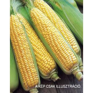 Zea 'Earlybird' F1 - Csemege kukorica