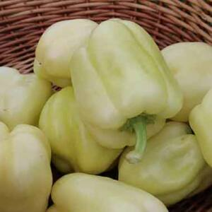 Capsicum 'Salana' – TV paprika (sárga)