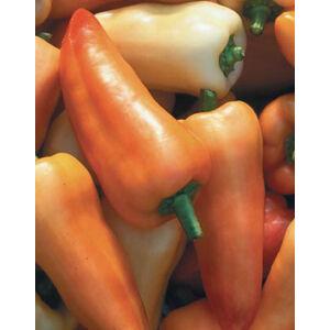 Capsicum 'Fehér özön' – Paprika