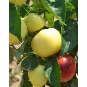 Capsicum 'Szalva' - Csípős almapaprika