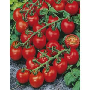 Lycopersicon 'Red Cherry' – Folytonnövő, koktélparadicsom