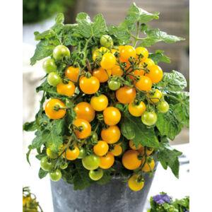 Lycopersicon 'Primagold' - Koktélparadicsom, sárga