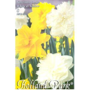 Nárcisz Duo - Teltvirágú fehér és sárga nárcisz