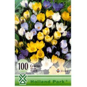 Botanikai krókusz színkeverék nagy kiszerelés (100)