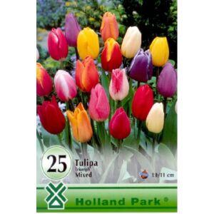 Triumph-típusú tulipán színkeverék nagy kiszerelés