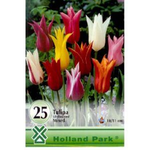 Liliomvirágú tulipán színkeverék nagy kiszerelés
