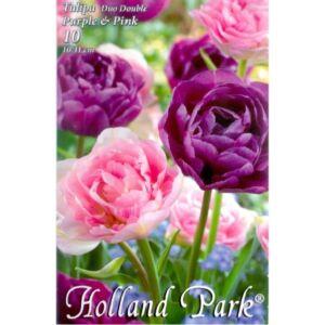 Tulipán Duo- Teltvirágú rózsaszín és lila tulipán