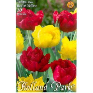 Tulipán Duo- Teltvirágú piros és sárga tulipán