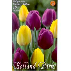 Tulipán Duo- Lila és sárga tulipán