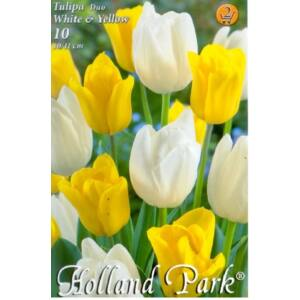 Tulipán Duo- Fehér és sárga tulipán