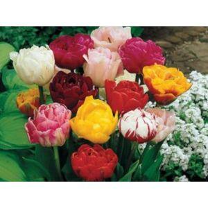 Teltvirágú tulipán színkeverék