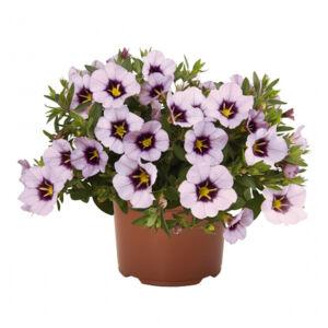 Calibrachoa 'Bloomblastic® Lavender' – Dúsvirágú petúnia