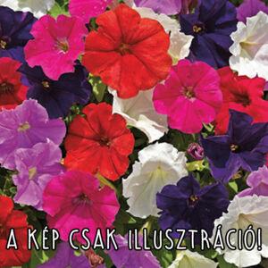 Petunia milliflora 'Picobella® mix' – Petúnia