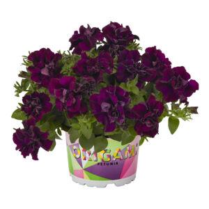 Petunia 'Origami® Burgundy' – Petúnia