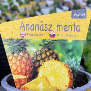 Ananász menta