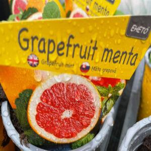 Grapefruit menta
