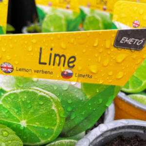 Lime menta