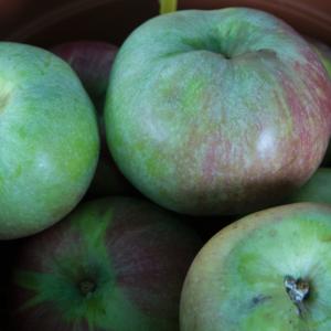 'Sikulai alma' régi almafajta