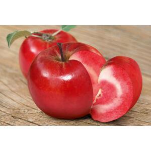 Vörösbelű (Sonja véralma) alma