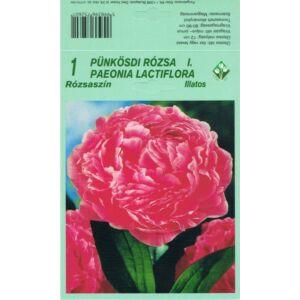 Pünkösdi rózsa - Paeonia lactiflora (rózsaszín)