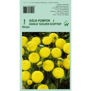 Pompon dália 'Golden Scepter' (sárga)