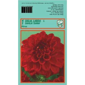 Dekoratív dália 'Diana' (piros)