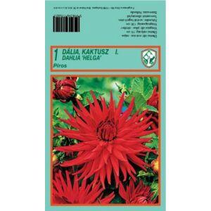 Kaktusz dália 'Helga' (piros)