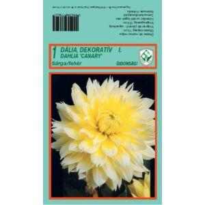 Dekoratív dália 'Canary' (fehér/sárga)