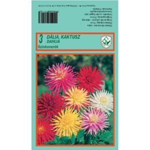 Kaktusz dália 'Kaktusz DÁLIA MIX' (színkeverék)