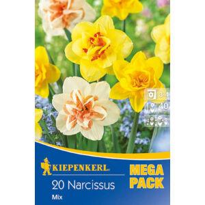 Mega-Pack – Nárcisz teltvirágú (színkeverék)