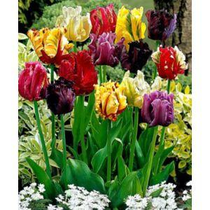 Papagájvirágú tulipán színkeverék