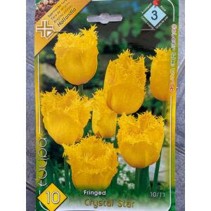 Rojtos szirmú tulipán 'Crystal Star'