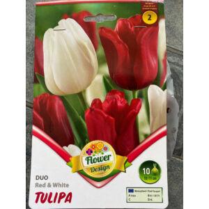 Tulipán Duo - Bordó és fehér tulipán