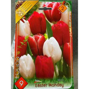 Tulipán Trio - Easter Monday