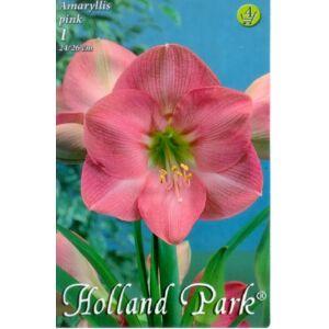 Hippeastrum - Rózsaszín amarillisz