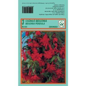 Begonia - Csüngő virágú begónia (bordó)