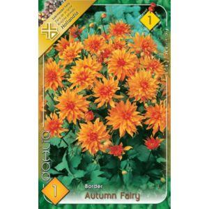 Border dália 'Autumn Fairy' (narancssárga)