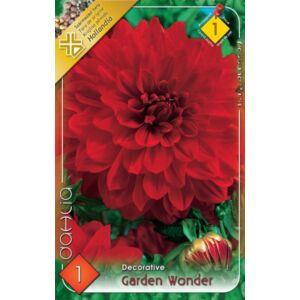 Dekoratív dália 'Garden Wonder' (piros)
