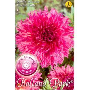 Dekoratív dália 'Myrtle's Folly' (rózsaszín)
