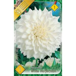 Dekoratív dália 'White Profection' (fehér)