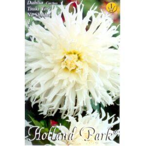 Kaktusz dália agancsos 'Tsuki Yori No Shisha' (fehér)