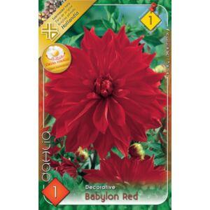 Óriás dekoratív dália 'Babylon Red' (piros)